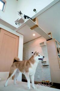 Cat_saikou2